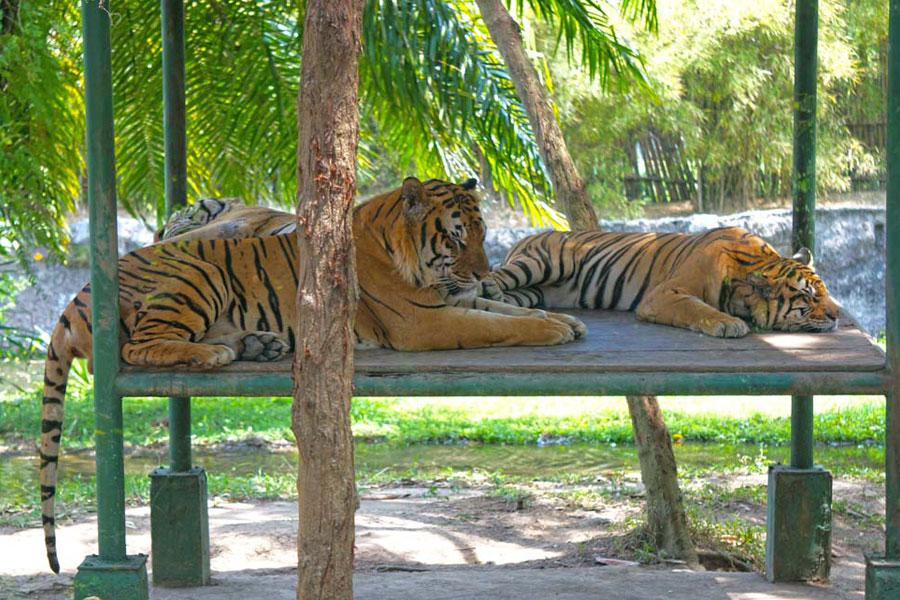 Bali Safari & Marine Park | Bali Activities Deals | THE ...